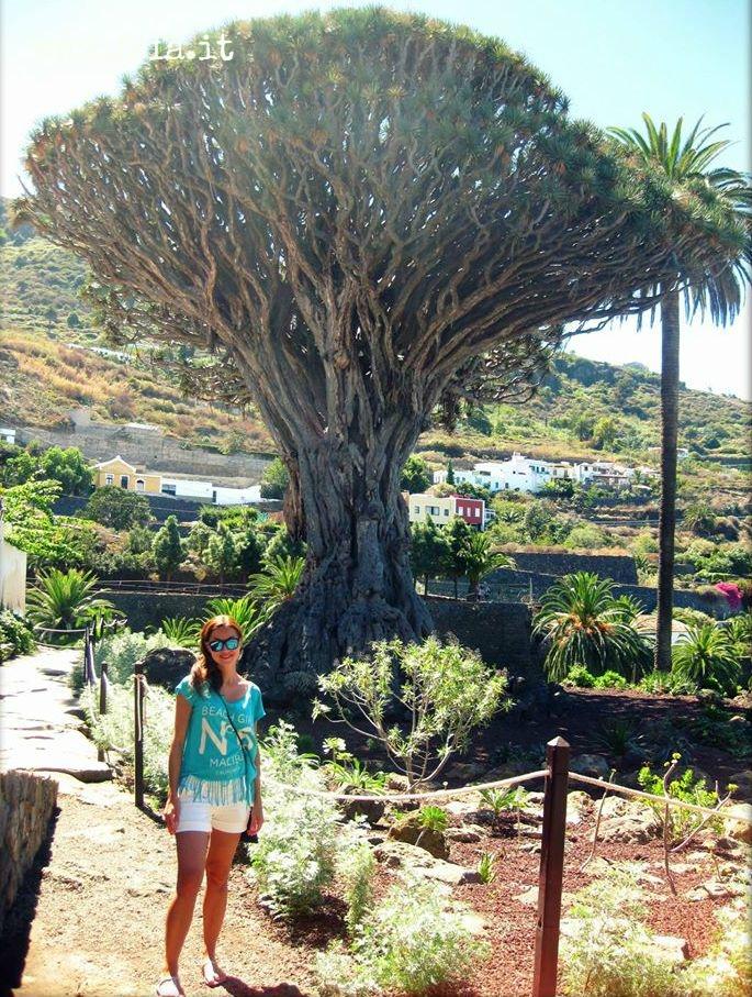 Io e il Drago Millenario, l'albero più antico delle Canarie.