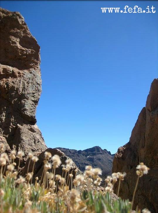Tenerife - Los Roques De Garcia
