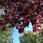 Fall again autumnvibes fromwhereistand fallseason autumn sadness liveauthentic nofilter livesimplehellip