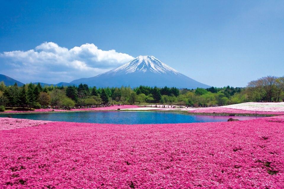 http://www.tuttogreen.it/fotogreen/shibasakura-3/Monte+Fuji+innevato/73194/5936/