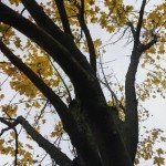 yellow fall coldermonths naturephotography nature trees magical parklife autumn novemberhellip