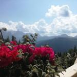 Nostalgia di un pomeriggio destate flowerporn sunnyday trentinoaltoadige placeswow travelmemorieshellip