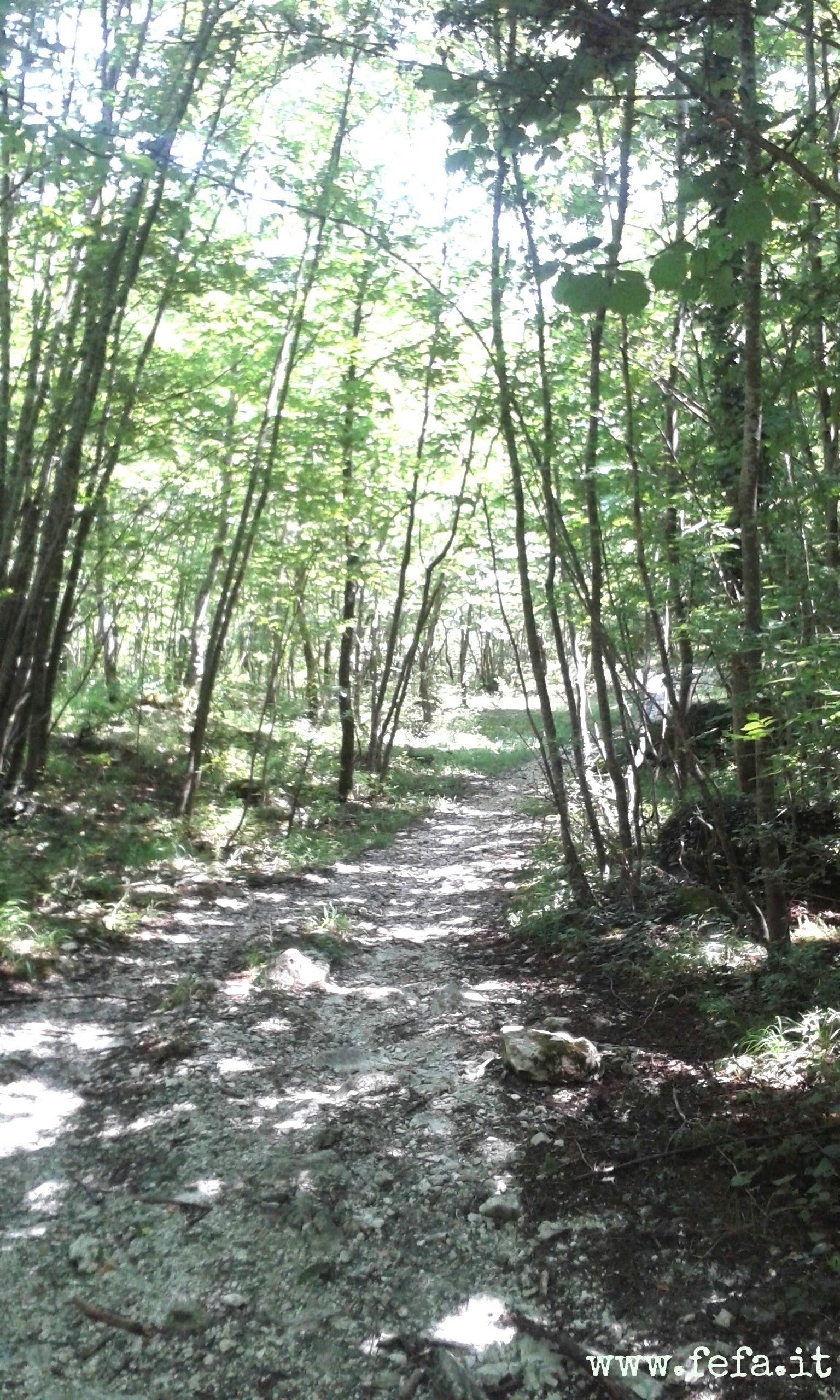 Lo splendido e misterioso bosco di faggi centenari.  (Valle dei Tre Santi, Gola del Tennacola, Sarnano)