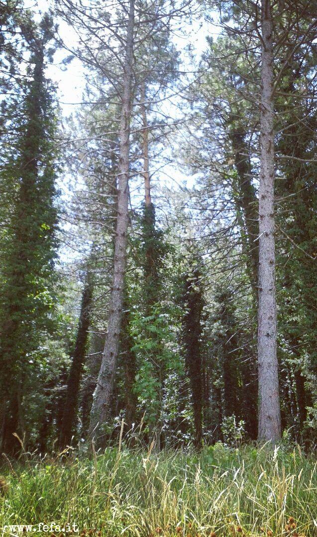 alberimontepuro